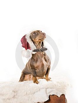 Xmas Dog Isolated Stock Photos - Image: 17161013