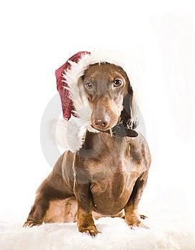 Xmas Dog Isolated Royalty Free Stock Image - Image: 17161016