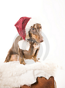 Xmas Dog Isolated Stock Photo - Image: 17161020