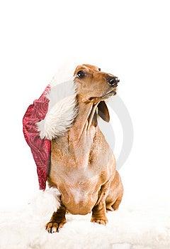 Xmas Dog Isolated Royalty Free Stock Image - Image: 17161026