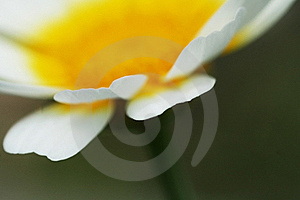 Flower Petal Macro Royalty Free Stock Photography - Image: 17167247