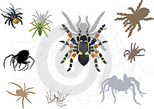 Set Of Spiders And Webs Stock Photography - Image: 17168142