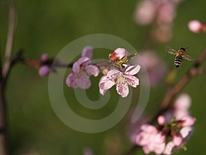 Bee In Work Royalty Free Stock Images - Image: 17169619