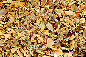 Dry Leaves Royalty Free Stock Images - Image: 17171109