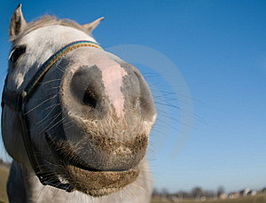 Portrait Of A Horse Stock Image - Image: 17172881