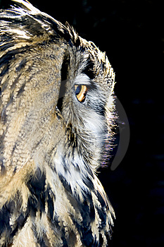 Portrait Of Wise Owl Stock Photography - Image: 17173832