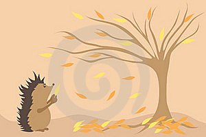 Hedgehog And Autumn Stock Image - Image: 17178911