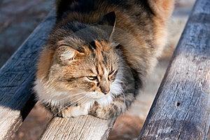 Cat Portrait ,a Close Up View Stock Photography - Image: 17196002