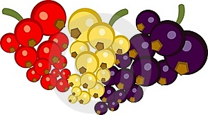 Red, White And Black Currants Royalty Free Stock Photos - Image: 17199828