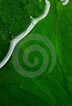 Wet Leaf Texture Royalty Free Stock Images - Image: 17208939