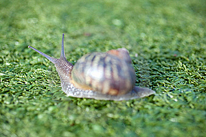 Snail Royalty Free Stock Photo - Image: 17209735