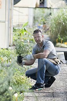 Gardener At Work Stock Photos - Image: 17215533