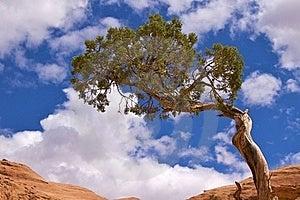 Corona Arch Trail Stock Image - Image: 17216411