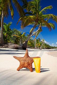 Starfish And Sun Protection Tube Stock Image - Image: 17216871