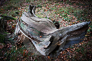 Log Stock Photos - Image: 17221573