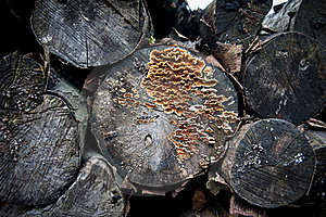 Log Stock Photography - Image: 17221642