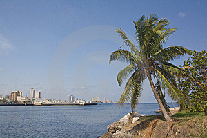 Coconot Tree In Havana City Bay Entrance Stock Photo - Image: 17223050