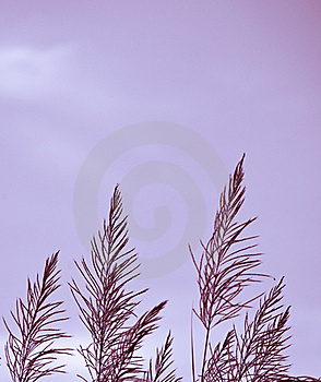 Grass With Blue Sky Royalty Free Stock Photos - Image: 17229678
