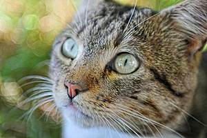 Looking Cat Close-up Royalty Free Stock Photography - Image: 17230087