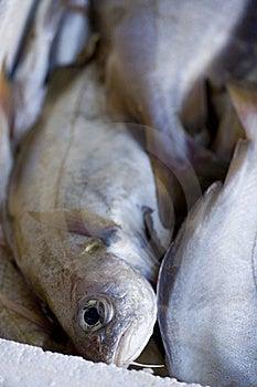 Freshly Caught Fish Royalty Free Stock Photo - Image: 17235485