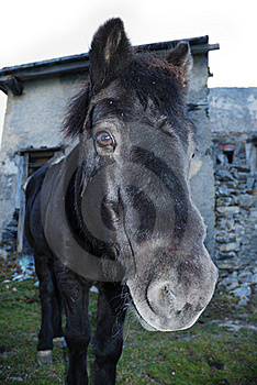 The Horse Royalty Free Stock Image - Image: 17236936