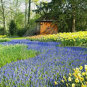 Keukenhof Gardens Stock Image - Image: 17237941
