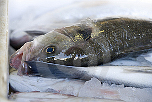 Freshly Caught Fish Royalty Free Stock Images - Image: 17239519