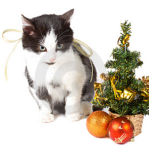 Cat And Christmas Decorations Stock Photography - Image: 17252662