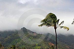 Tropical Plantation Hawaii Stock Image - Image: 17257071