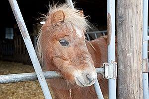 Mini Pony Royalty Free Stock Image - Image: 17257366