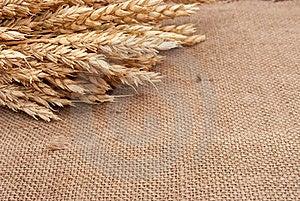 Wheat Ears Royalty Free Stock Photos - Image: 17264628
