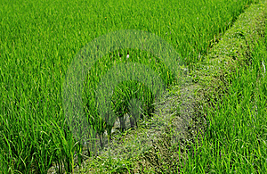Green Background Royalty Free Stock Photo - Image: 17288265