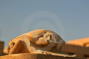 Big Scarab Stock Images - Image: 1733374