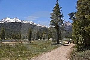 Yosemite NP Stock Photo - Image: 17302220