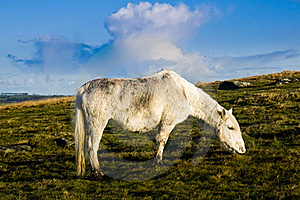 Bodmin Moor Cornwall Pony Stock Images - Image: 17306844
