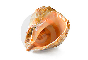 Shell Isolated Royalty Free Stock Photography - Image: 17311887