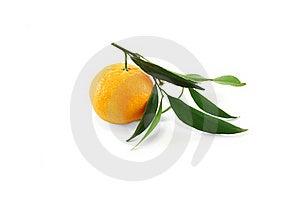 Tangerine Stock Photography - Image: 17311982