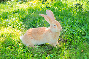 Cute Rabbit On The Grass Stock Photography - Image: 17315242
