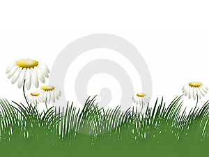 Grass And Camomiles Stock Images - Image: 17316514