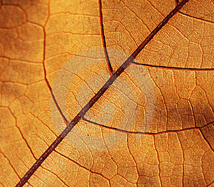 Jesień Liść Obrazy Royalty Free - Obraz: 17320989