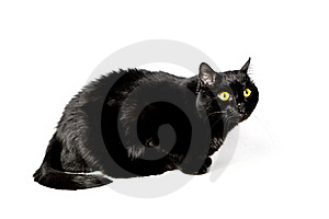 Black Cat Stock Images - Image: 17322404