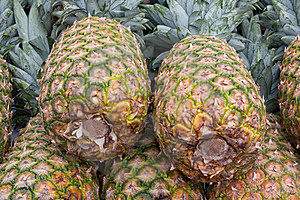 Pineapples Stock Image - Image: 17325051