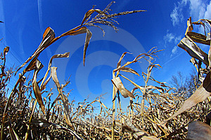 Abundant Harvest Royalty Free Stock Image - Image: 17325916