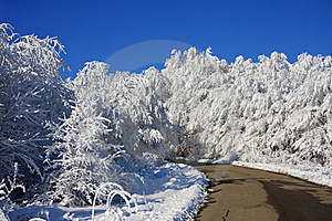 The Road To Dream-world Of Snow Forest Stock Photos - Image: 17326233