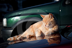 Sunbathing Cat Stock Photos - Image: 17334643
