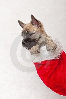 Christmas Present Royalty Free Stock Image - Image: 17334706
