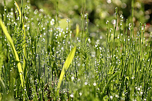 Dew On The Grass Royalty Free Stock Photos - Image: 17336578