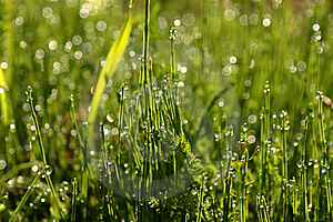 Dew On The Grass Stock Photography - Image: 17336682