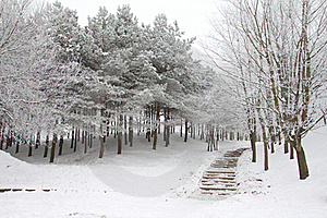 Park In Winter Stock Photo - Image: 17341040