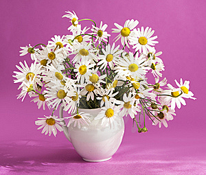 Bouquet Of Flowers Camomile Royalty Free Stock Image - Image: 17341636